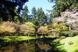 Nitobe Memorial Garden in Spring